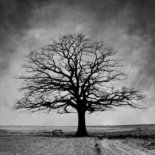 درخت,نفاق,دروغ,پناهگاه,شیطان,